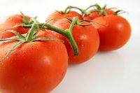 Tomato_vine