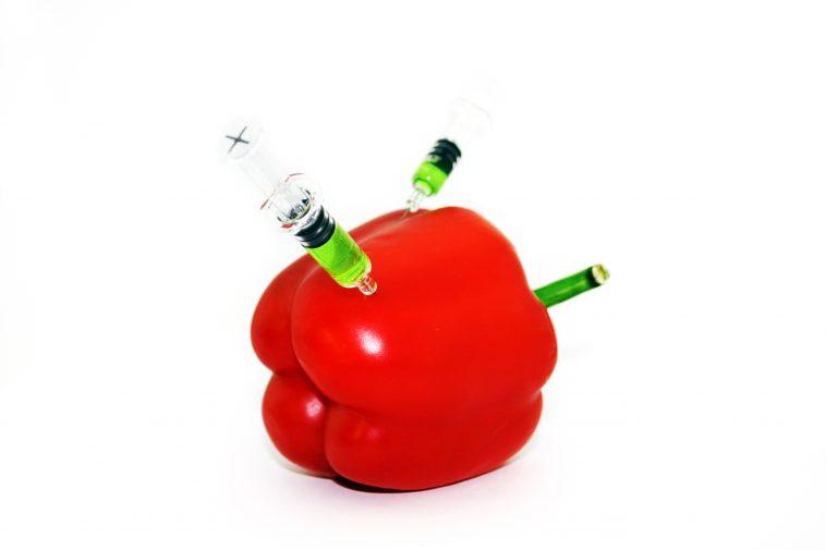 GMO-pepper