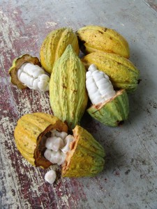 cocoa-fruit