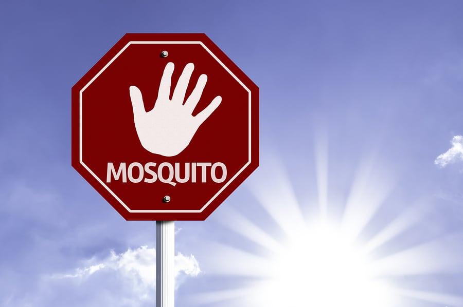 Para espantar a los mosquitos adelgaza 20 - Como ahuyentar a los mosquitos ...