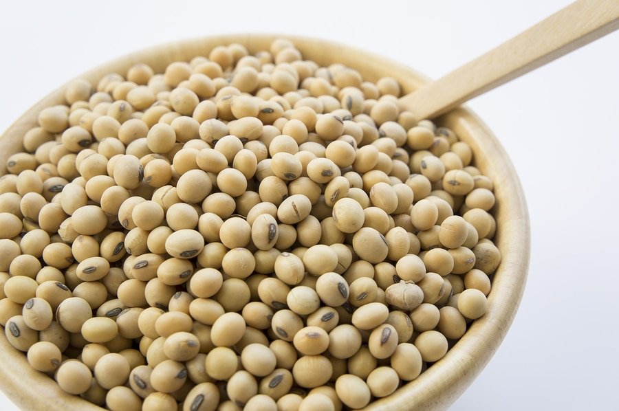 Soy Soybean Closeup Vegetable Nutrition Soya Concept